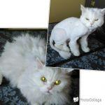 Выездная собак, Стрижка котов, кошек, недорого.