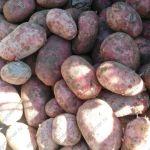 Картофель отличного качества оптом
